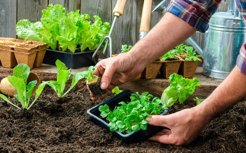 Hortas Caseiras: Quais temperos cultivar e como fazer
