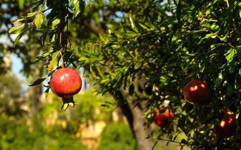 As melhores árvores frutíferas para se ter no jardim