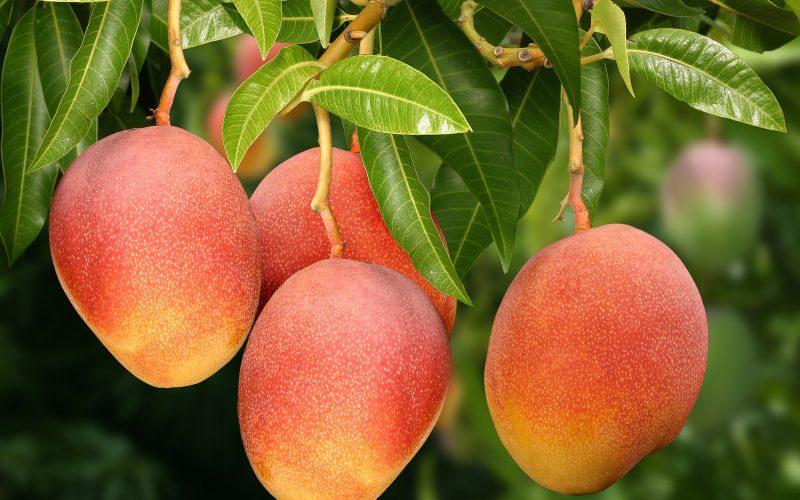 Árvores Frutíferas – Os principais cuidados que você deve ter