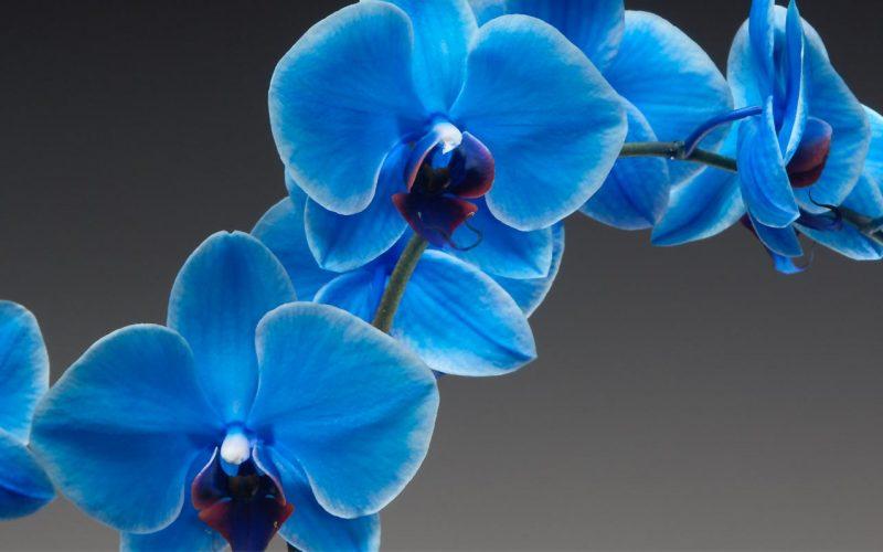 5 principais cuidados com orquídeas na primavera