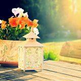 Flores ideais para se cultivar em casa