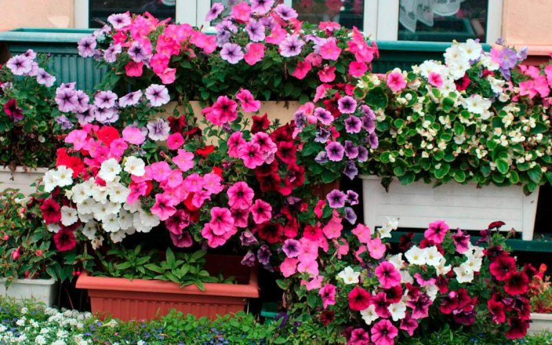 5 plantas perfeitas para se cultivar em apartamento