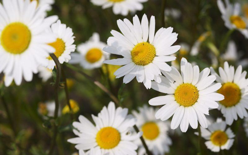 Conheça as flores perfeitas para o outono
