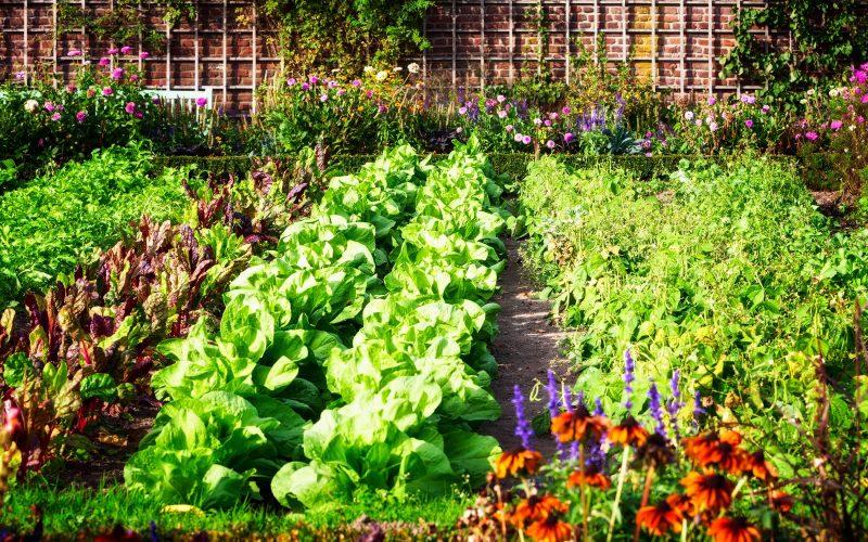 A união entre jardim e horta, uma experiência que dá certo