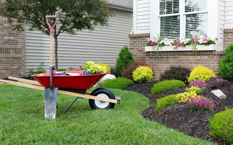 Dicas de paisagismo e jardinagem