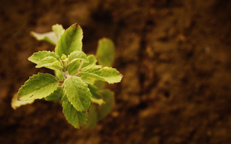 Sabia que o solo possui ph? Aprenda a medi-lo!