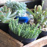 plantas para solos secos
