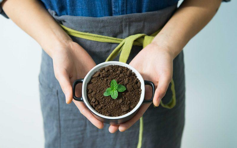 Aprenda a preparar o solo para o cultivo de flores