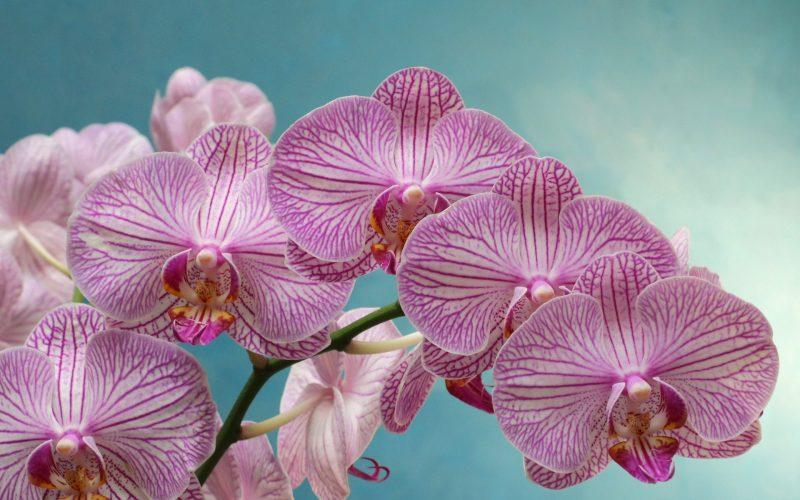 Aprenda a cultivar corretamente as Orquídeas!
