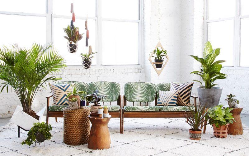 Conheça as plantas ideais para melhorar o ar da sua casa