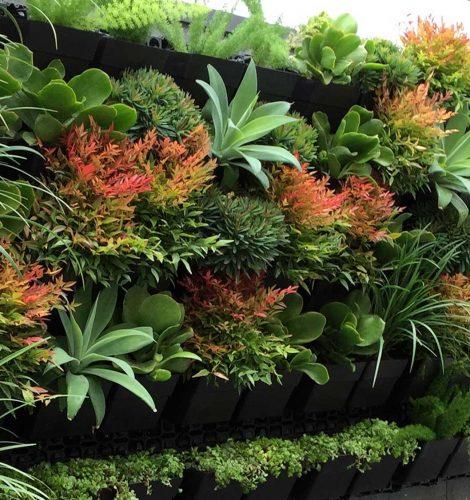 Plantas para jardins verticais