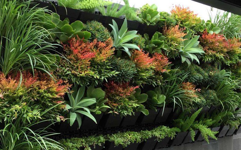Conheça as melhores plantas para o seu Jardim Vertical