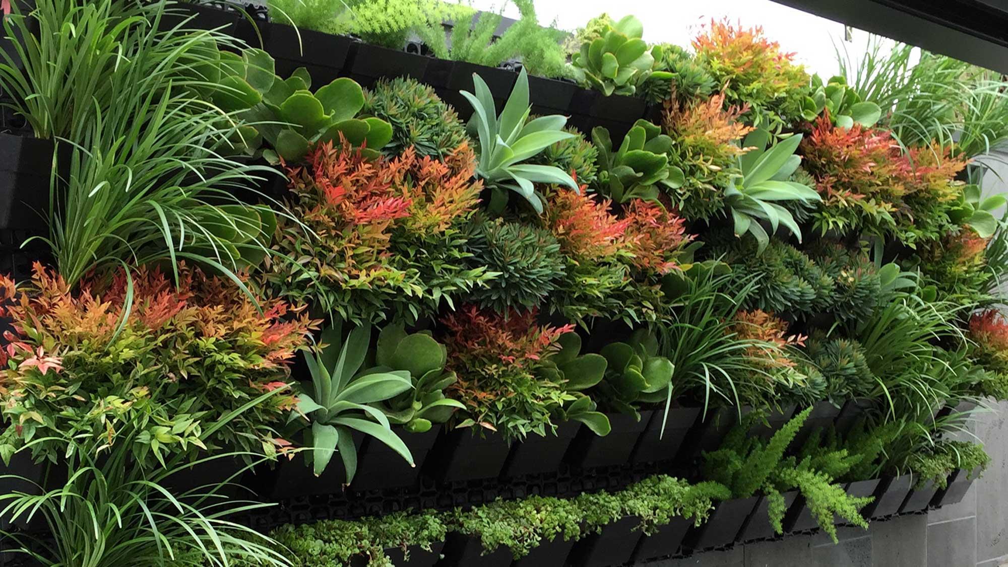 Conhe 231 A As Melhores Plantas Para O Seu Jardim Vertical