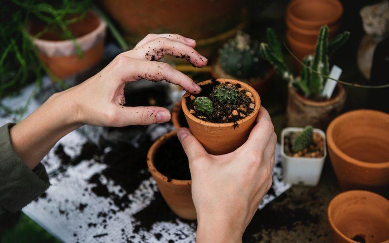 Quais são os reais benefícios do adubo orgânico e inorgânico