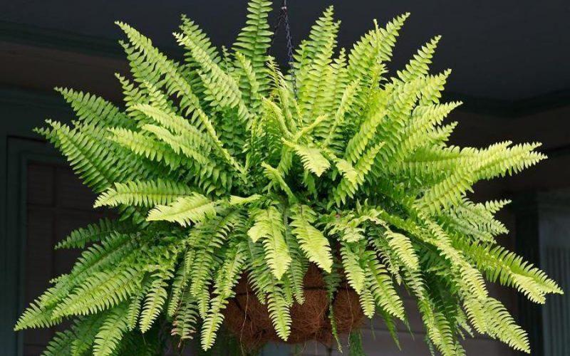 Veja 10 plantas lindas e fáceis de cuidar