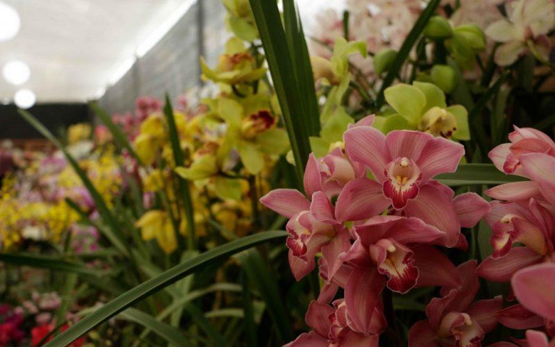 Aprenda a regar corretamente as orquídeas