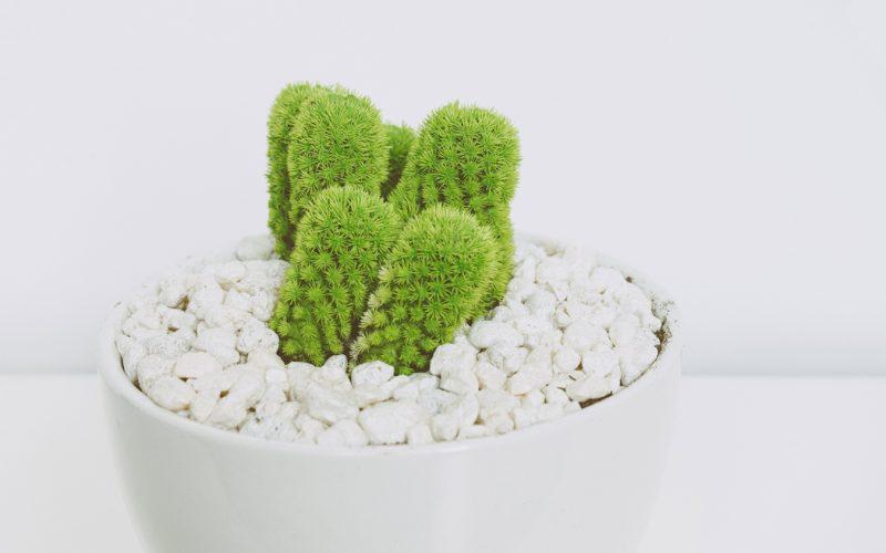 Pedras no fundo do vaso: sim ou não?