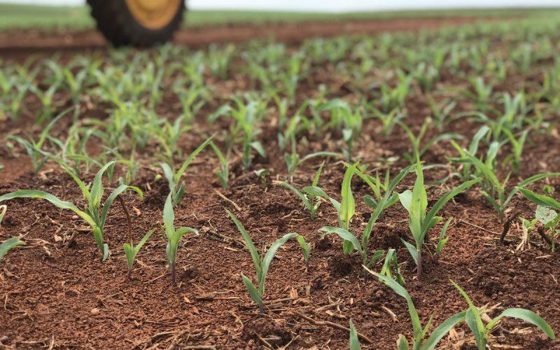 Tudo o que você precisa saber sobre fertilizantes