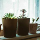 Qual o melhor tipo de material para os vasos de plantas?