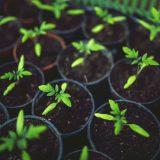 Adubos orgânicos: guia especial da Flora Morumby