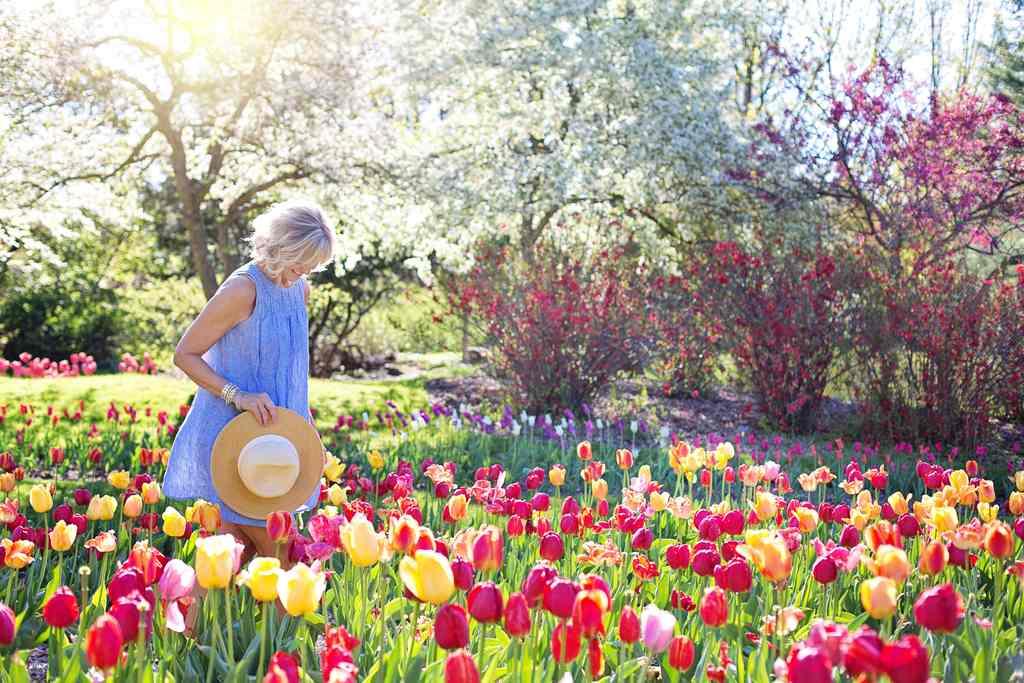 Paisagismo: confira 5 dicas para ter um lindo jardim.
