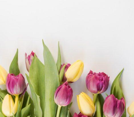 confira-essas-dicas-para-escolher-a-flor-ideal-para-o-dia-das-maes