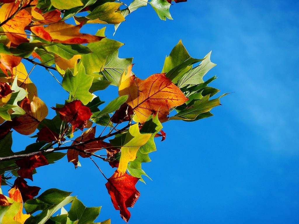 Descubra como deixar o seu jardim florido no outono.